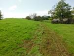 140506_pheasent field 10.jpg